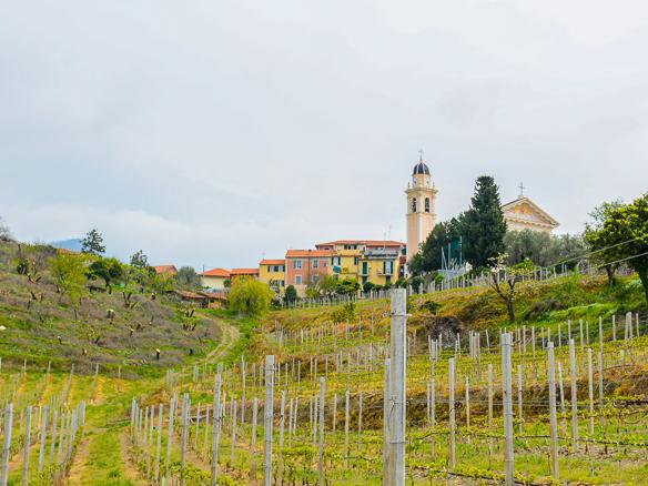 Weingut in Ligurien