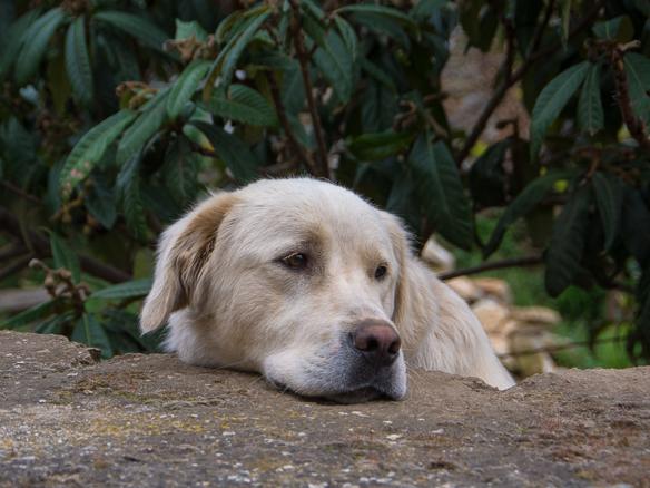 Portraet-Hundeblick-2015 (1 von 1)