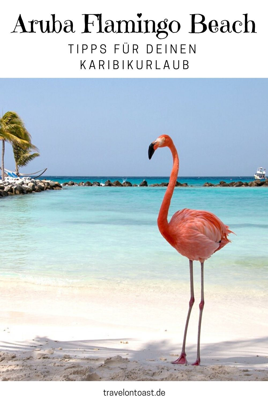 Ihr möchtet den berühmten Aruba Flamingo Beach besuchen? Hier findet ihr die besten Tipps, wie ihr mit den Flamingos baden und sie fotografieren könnt. / Aruba / Aruba Urlaub / Aruba Tipps / Karibik Urlaub / Karibik Bilder / Karibik Meer #Aruba #Karibik #Urlaub #Reisen