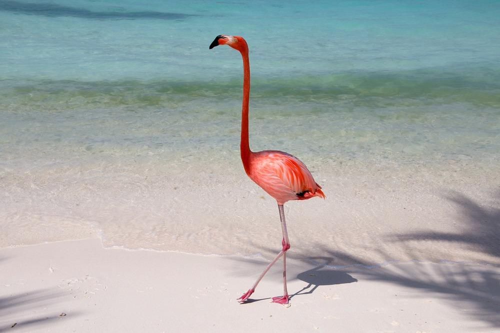 Aruba: Mit Mr. Flamingo auf der einsamen Insel