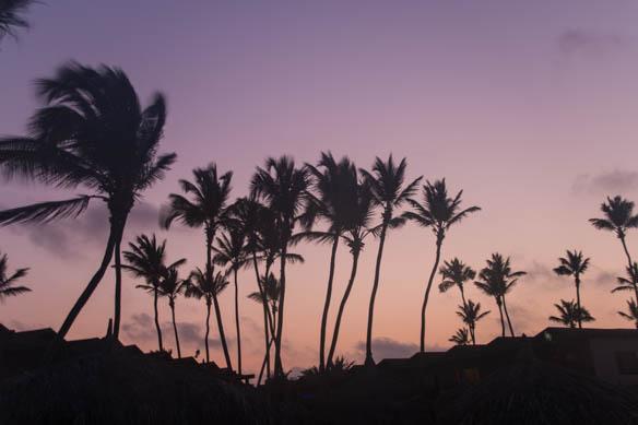 Palmen auf Aruba