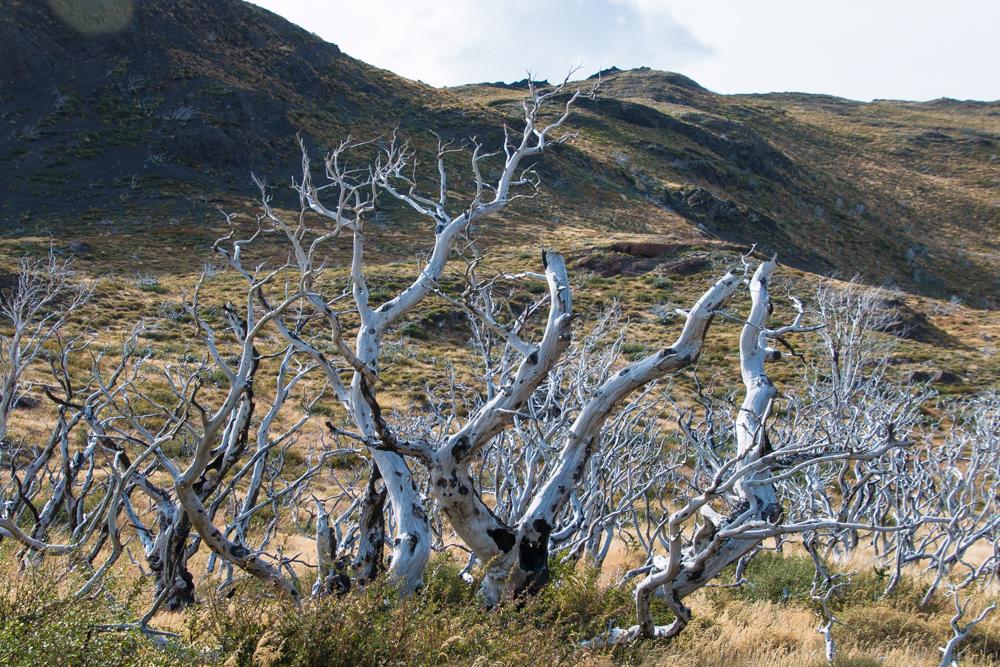 Brandspuren Torres del Paine