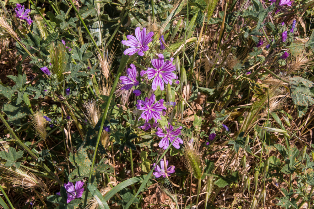 Blumen in der Camargue