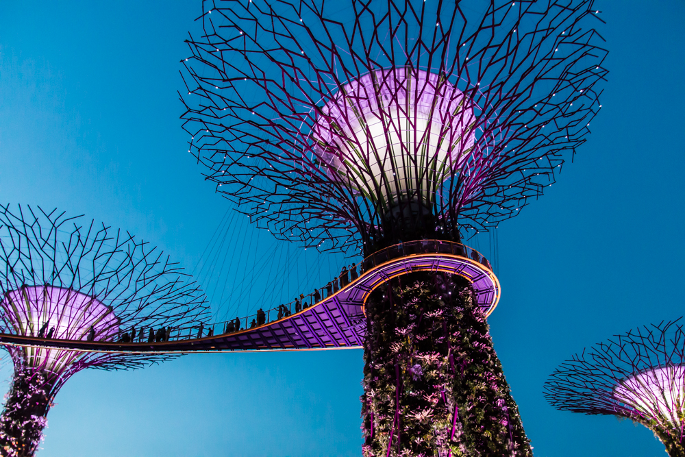 Supertrees Gardens by the Bay Singapur Highlights Sehenswürdigkeiten