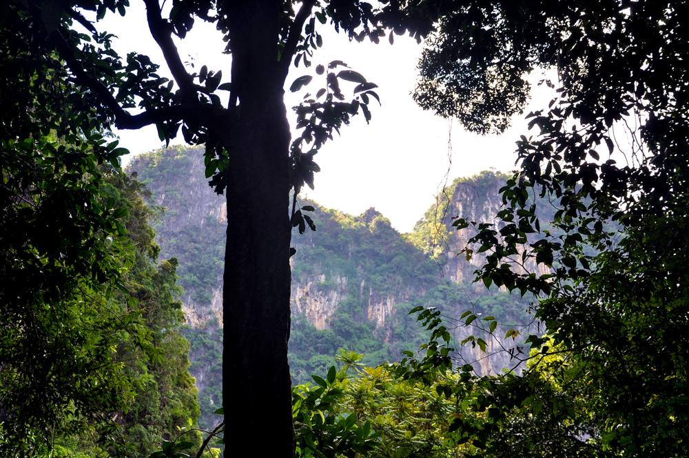 10_Krabi Dschungeltour Regenwald