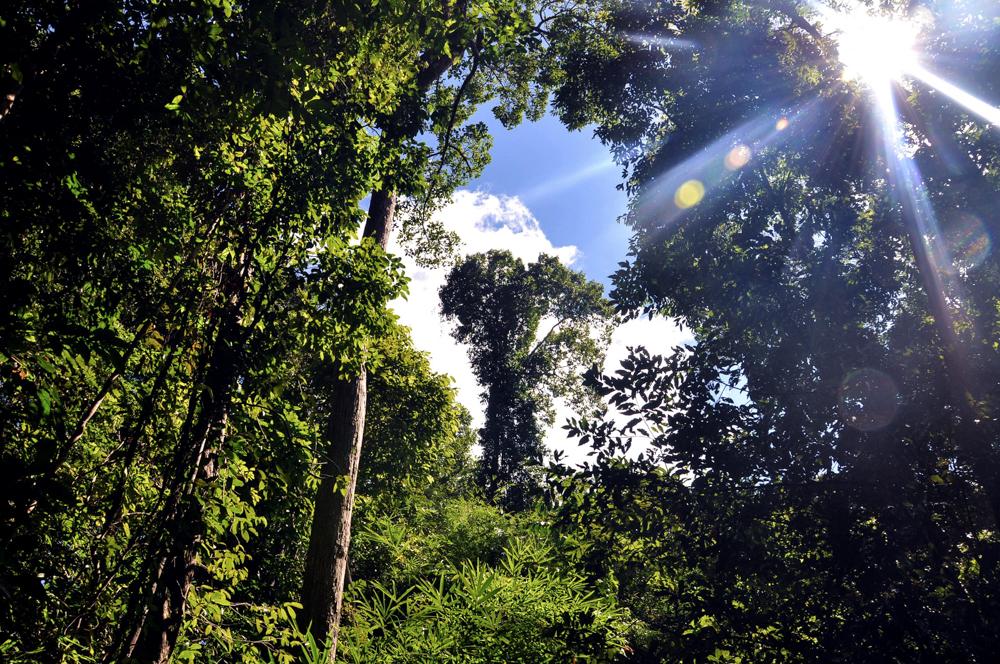 2_Krabi Dschungeltour Regenwald_