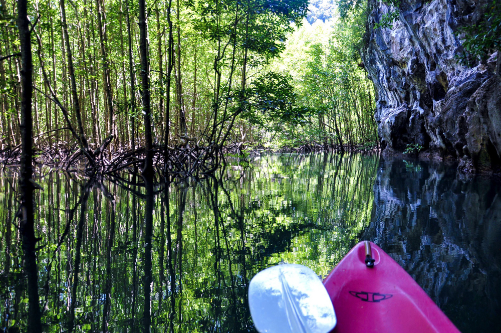 2_Krabi Thailand Kajaktour Thalen Bay Mangroven Mangrovenwald
