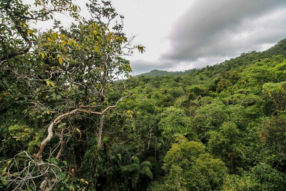 Daintree Rain Forest