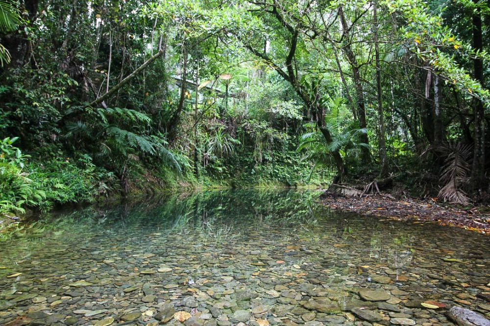 Daintree Swimminghole