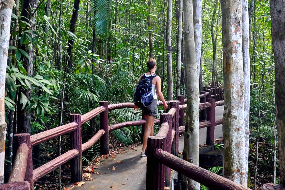 a 1_Krabi Dschungeltour Regenwald
