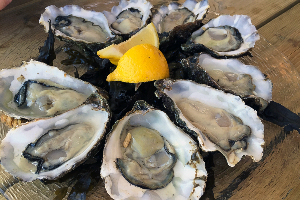 08 Austern aus Zeeland