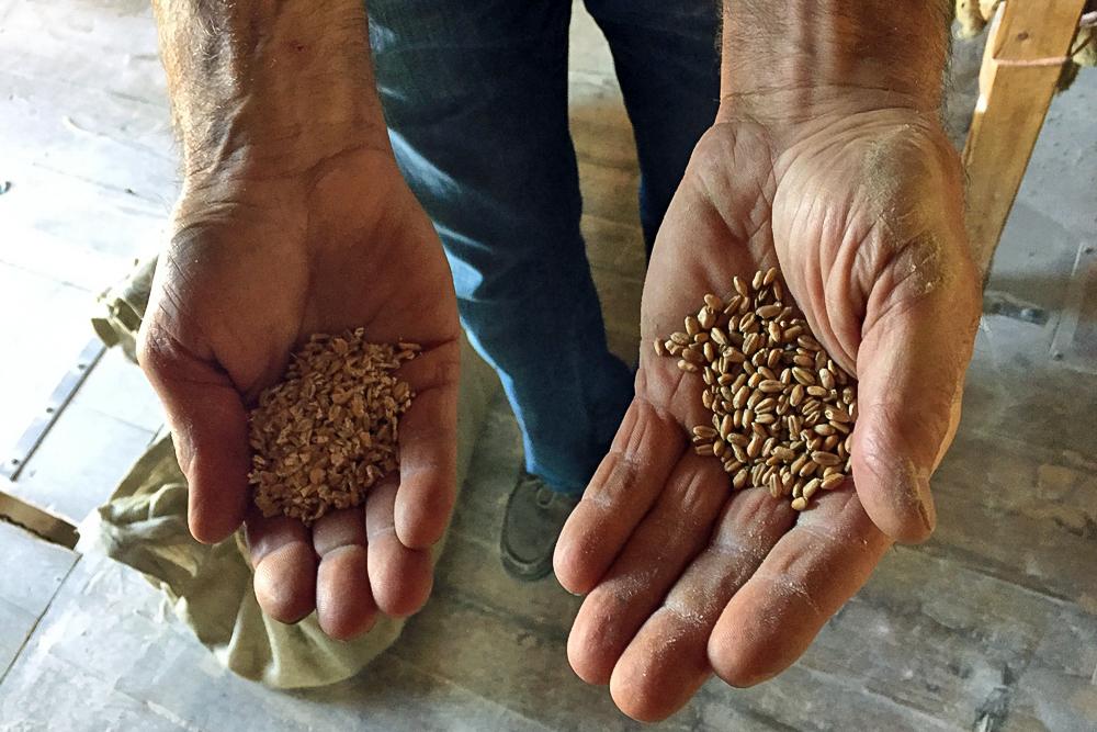 15 Mühle Hände Korn