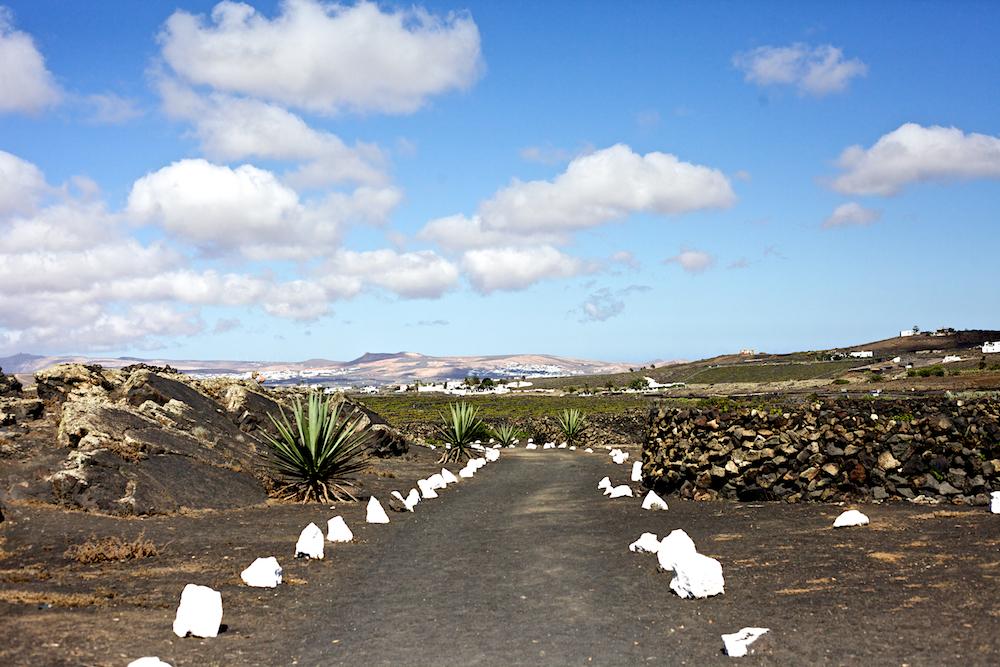 Lanzarote - La Geria