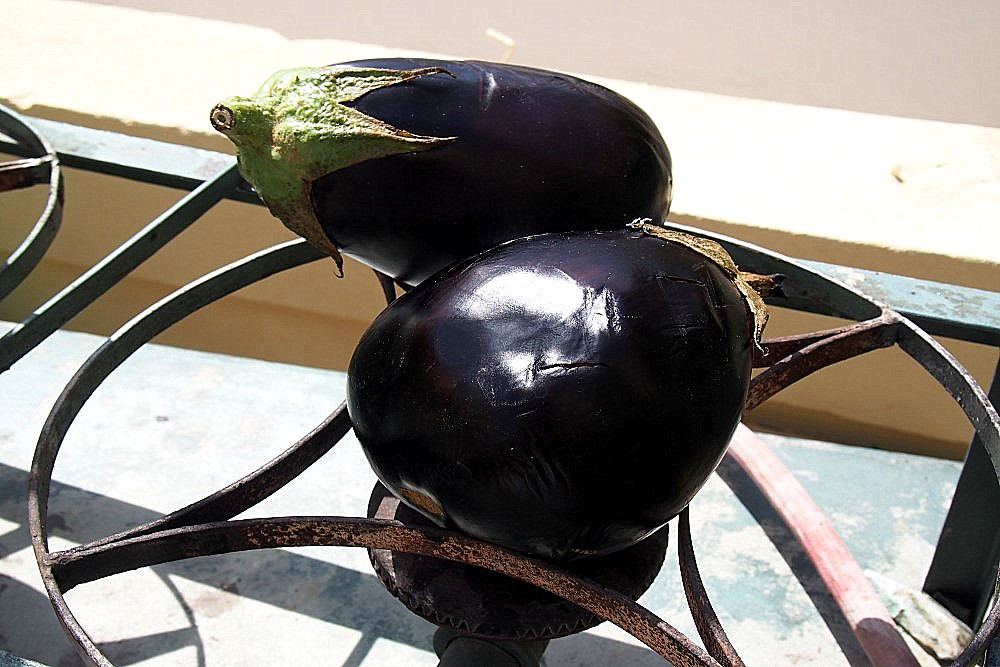 Auberginen