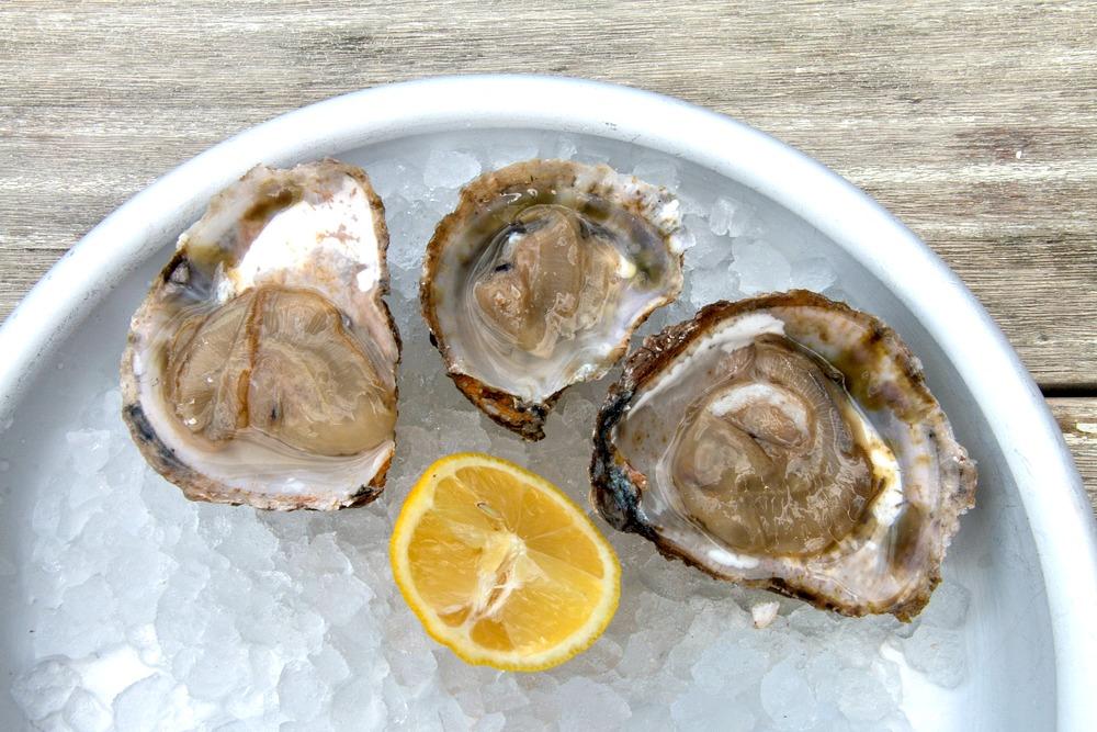 Austern aus England