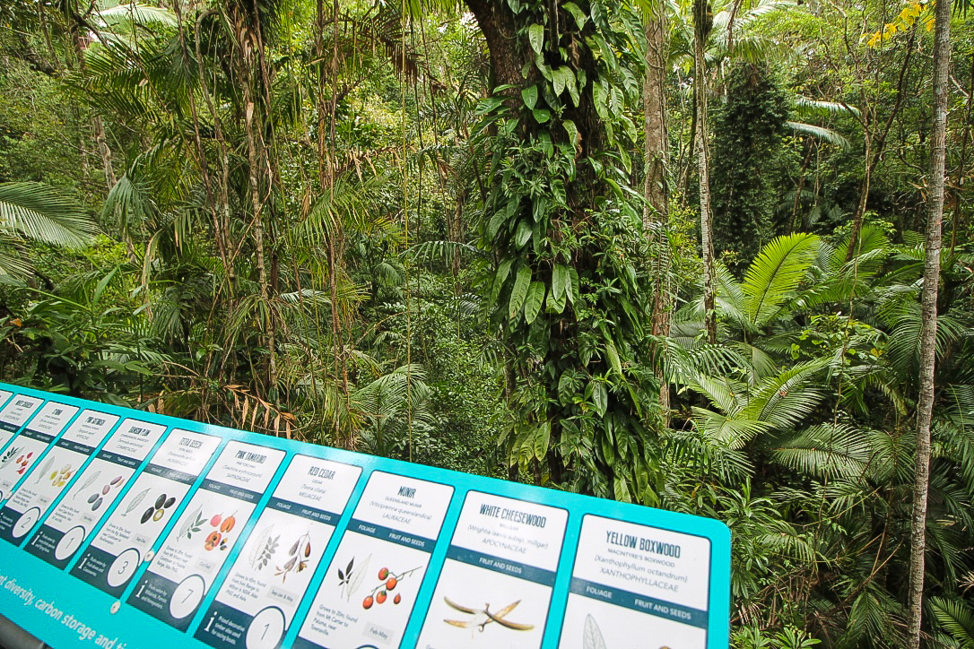 Australien Daintree Discovery Centre 2