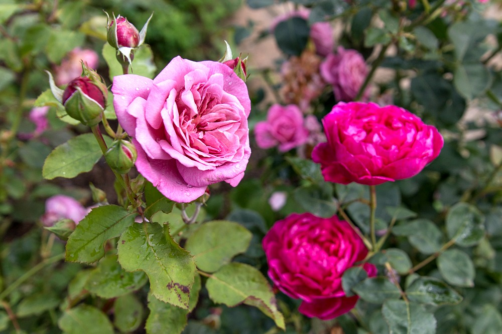 Englischer Garten - Sissinghurst