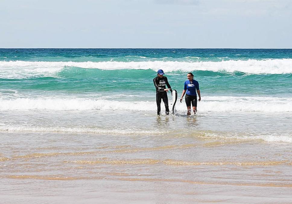 Queensland Coolum Surfschool 2