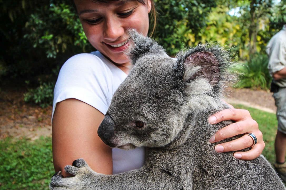 Reiseblog - Australia Zoo Koala 2