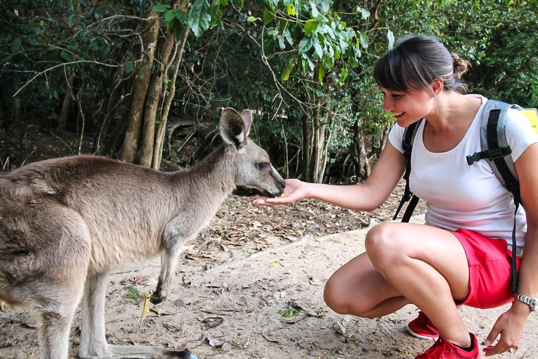 Reiseblogger Franzi im Australia Zoo mit Känguru