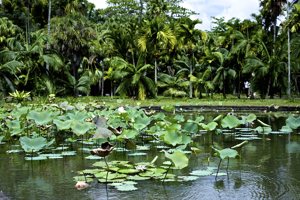 Mauritius Pamplemousses Botanical Garden