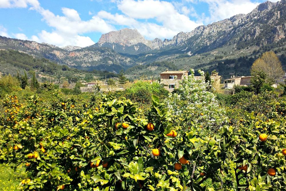 Mallorca Orangental