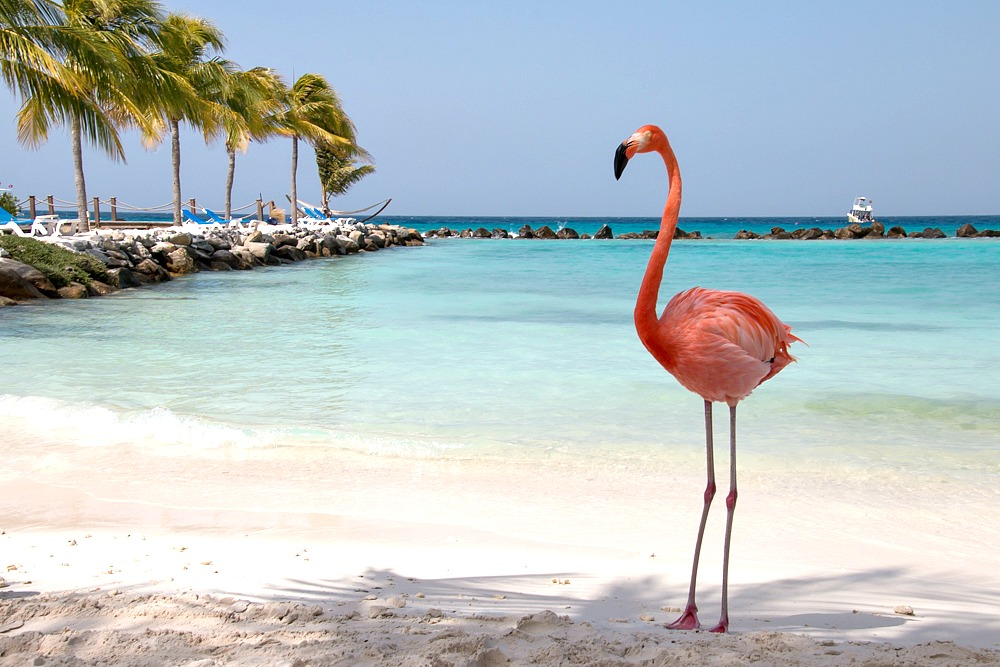 Aruba Flamingo Beach Hotel