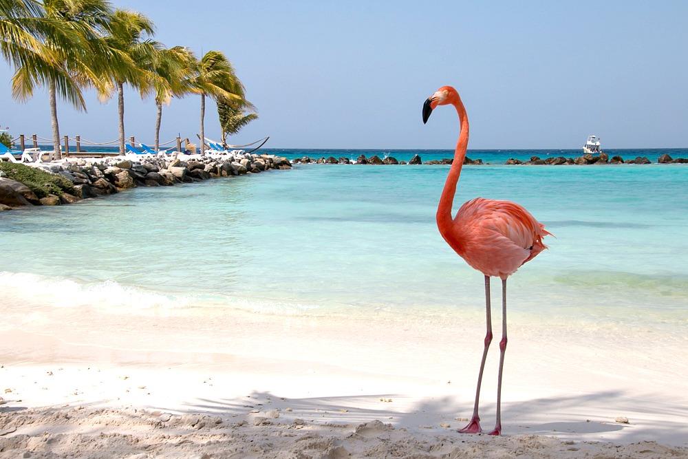 Flamingo am Strand von Aruba