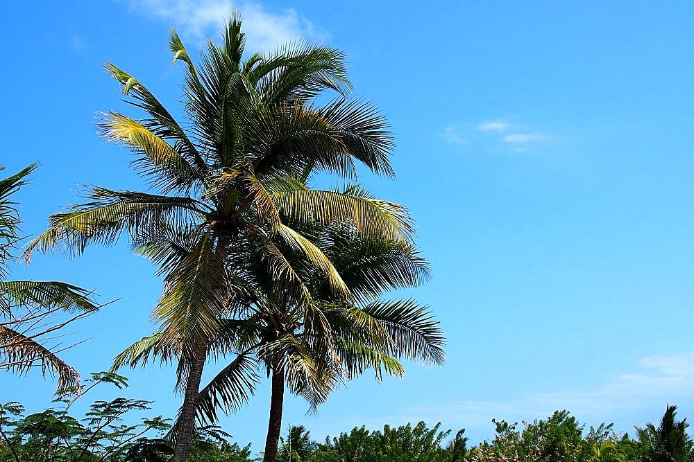 Palmen auf Sansibar