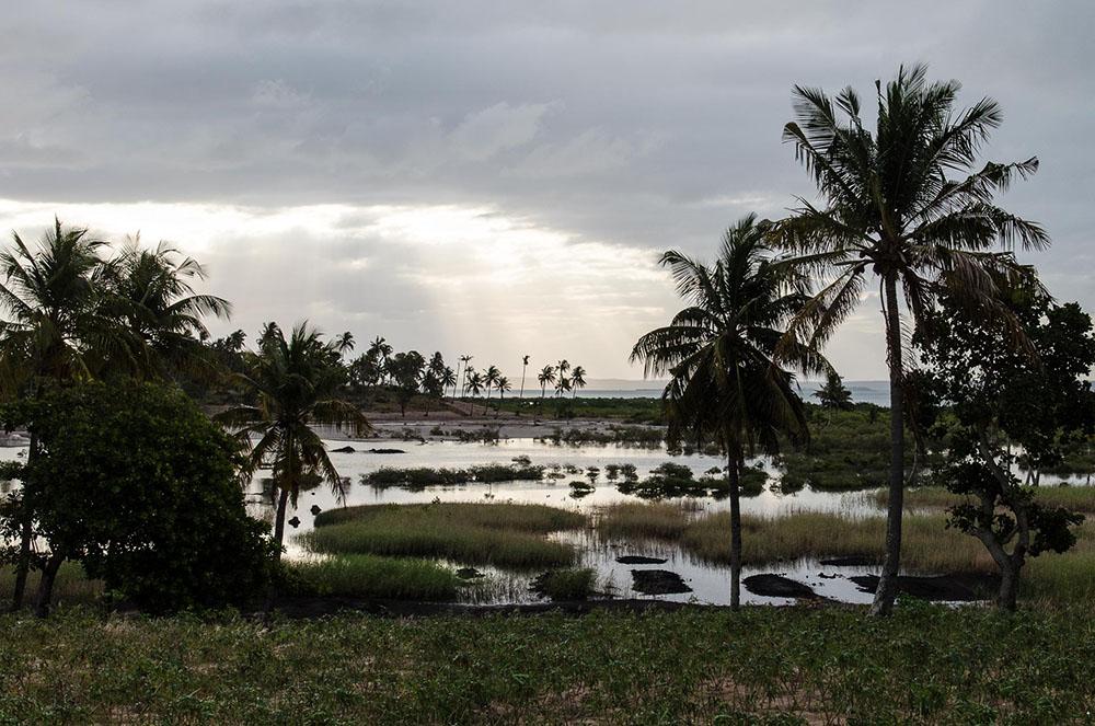 11-afrika-mosambik-palmen-tofo-c-arianebille