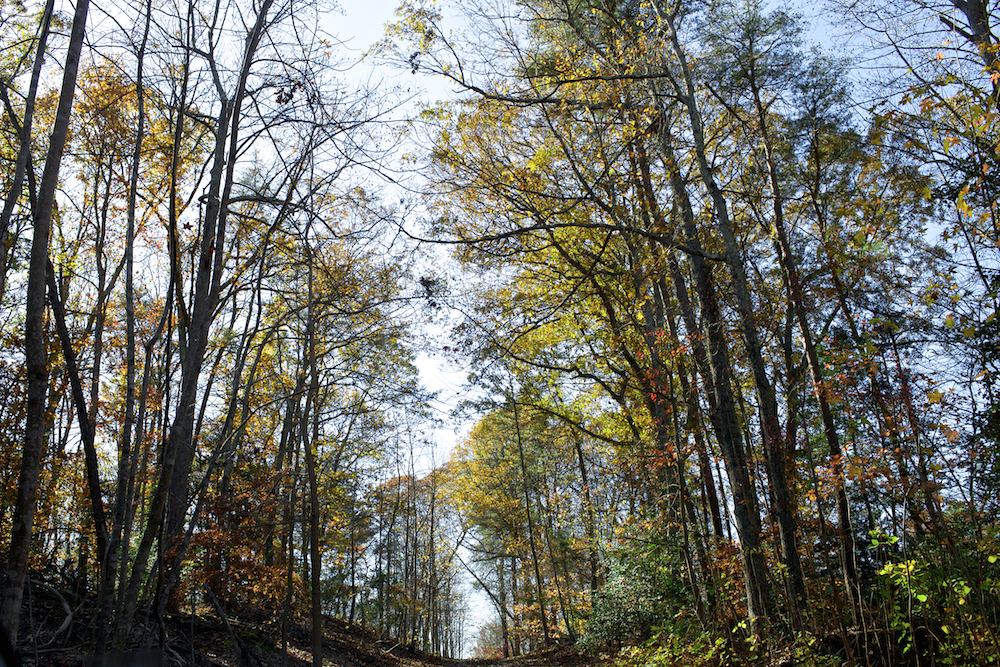 USA Virginia Roadtrip