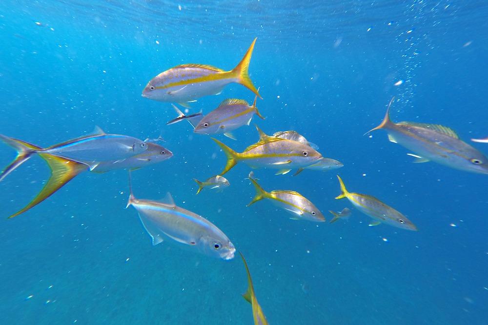Fische Schnorcheln