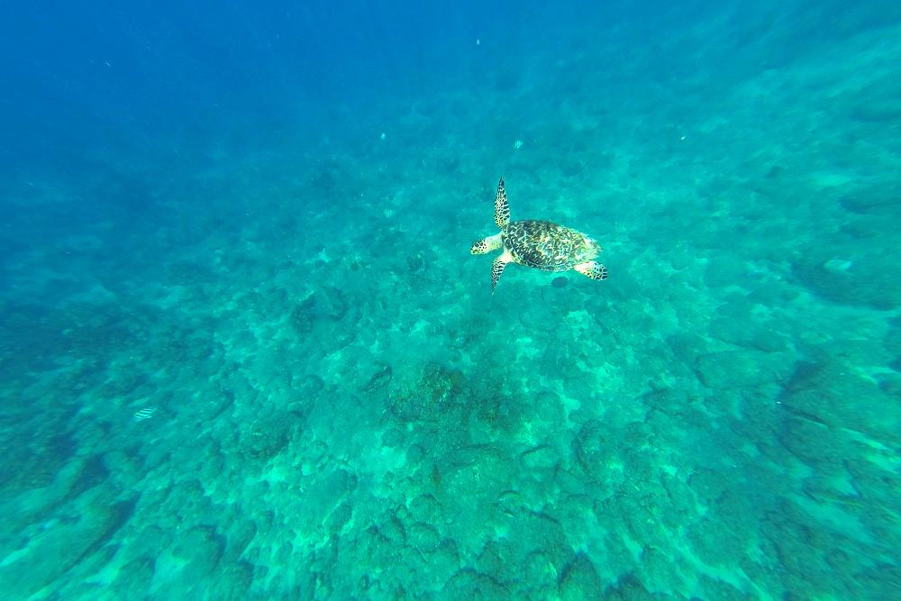 Schnorcheln Schildkröte