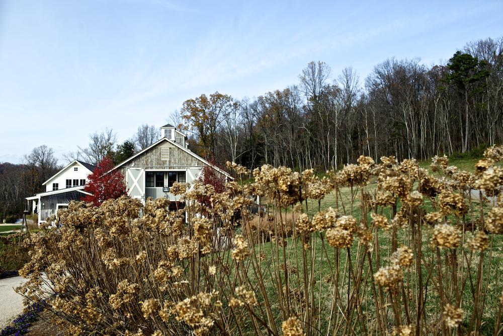 USA Virginia Landschaft Albemarle County_2
