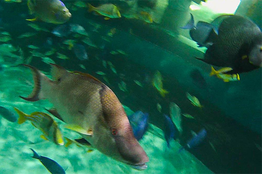 Aquarium Marathon