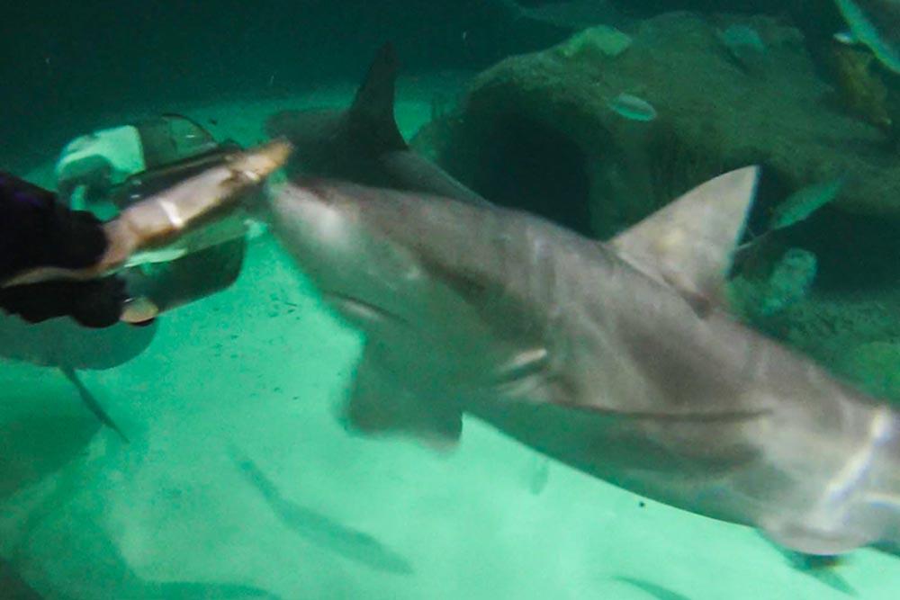 Florida Keys Sehenswürdigkeiten Haie