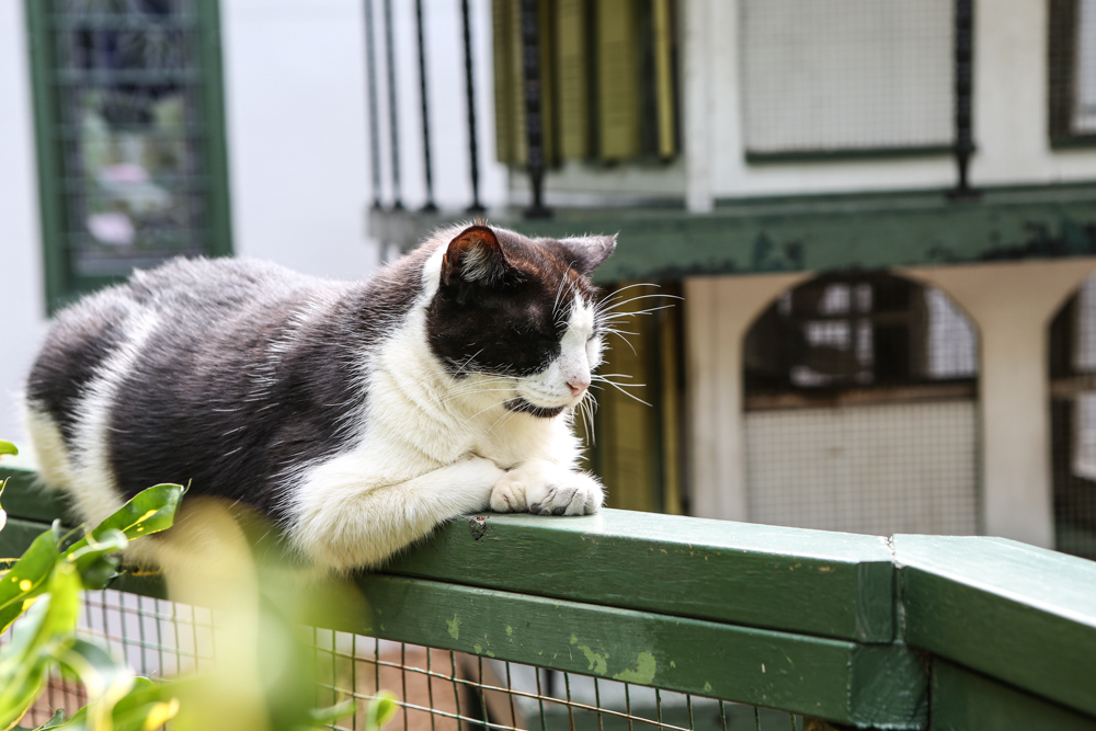 Hemingway Haus Katze