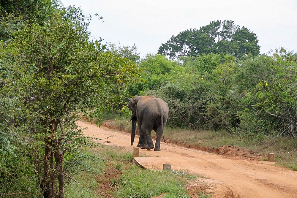 Safari in Sri Lanka