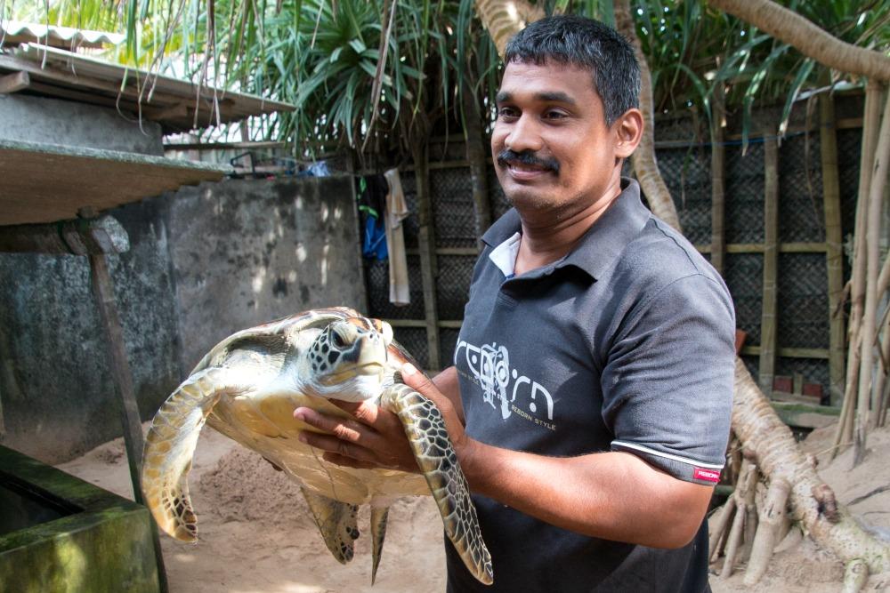 Schildkrötenstation Turtle Kosgoda Sri Lanka