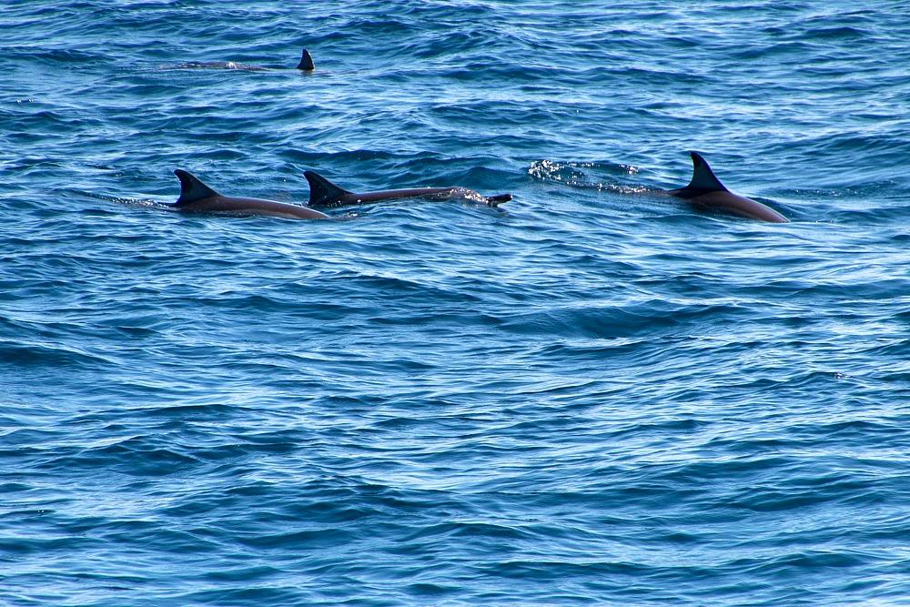 Sri Lanka Delfine Bootstour Mirissa