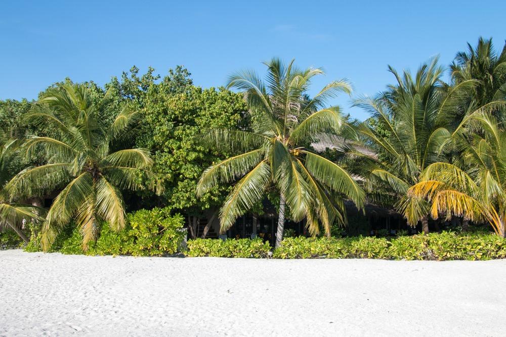Strand Malediven Palmen Urlaub Reise