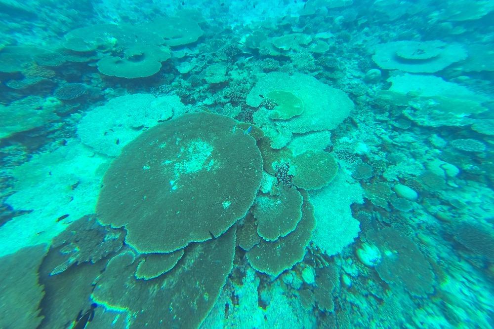 Malediven Schnorcheln