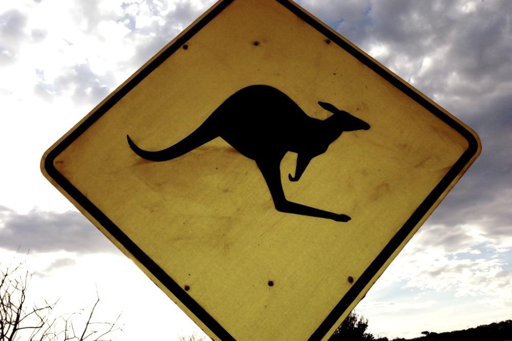 Great Ocean Road Australien Känguru