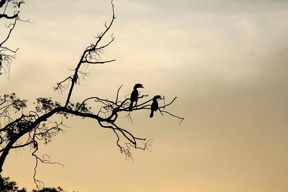 Vögel Yala National Park Sri Lanka