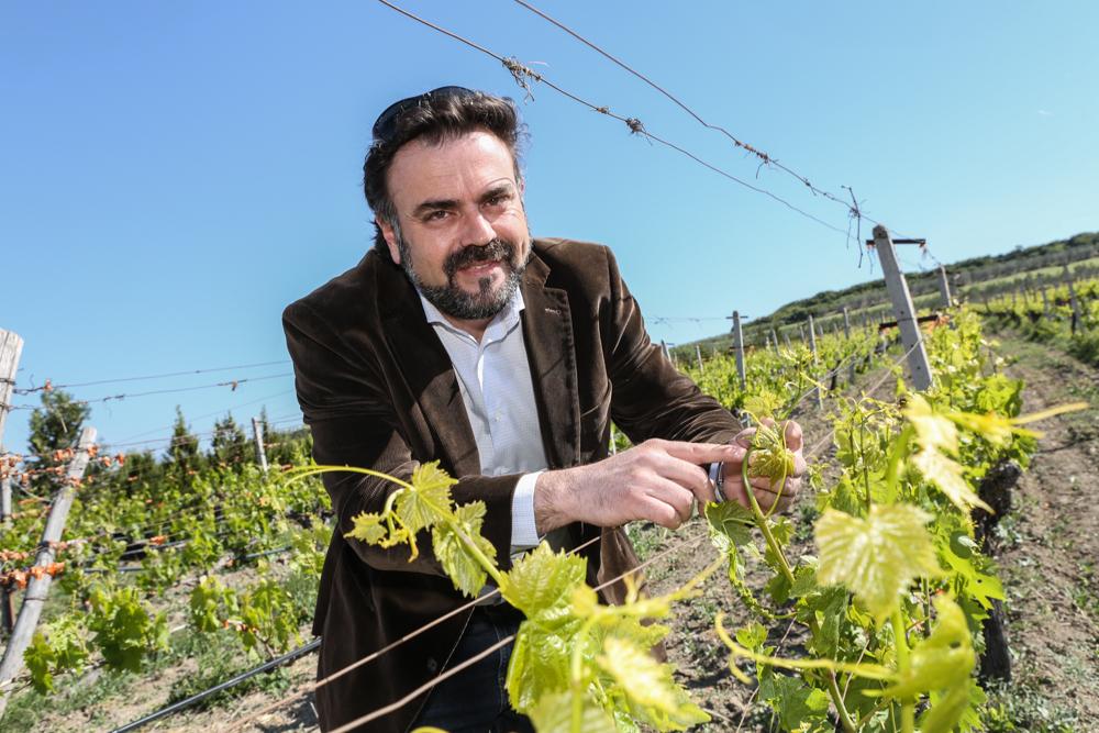 17 Griechenland Chalkidiki Kazakis Wein Anbau