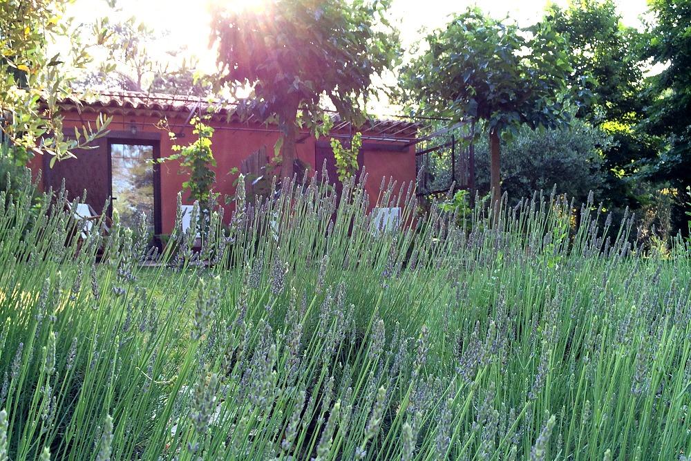2 Provence Südfrankreich Frankreich Lavendel