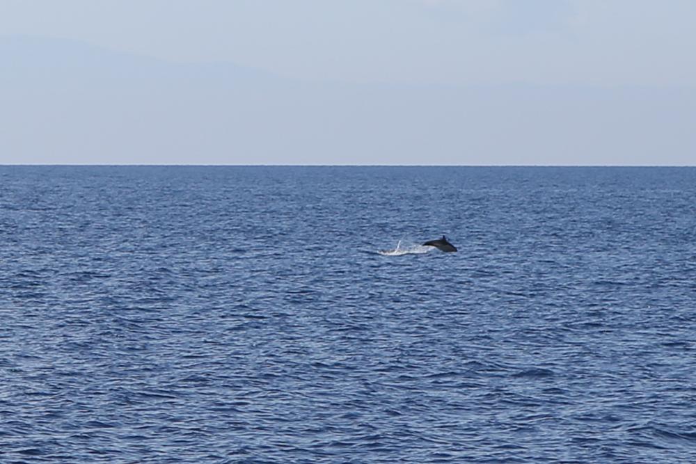 28.1 Griechenland Chalkidiki Boot Delfine