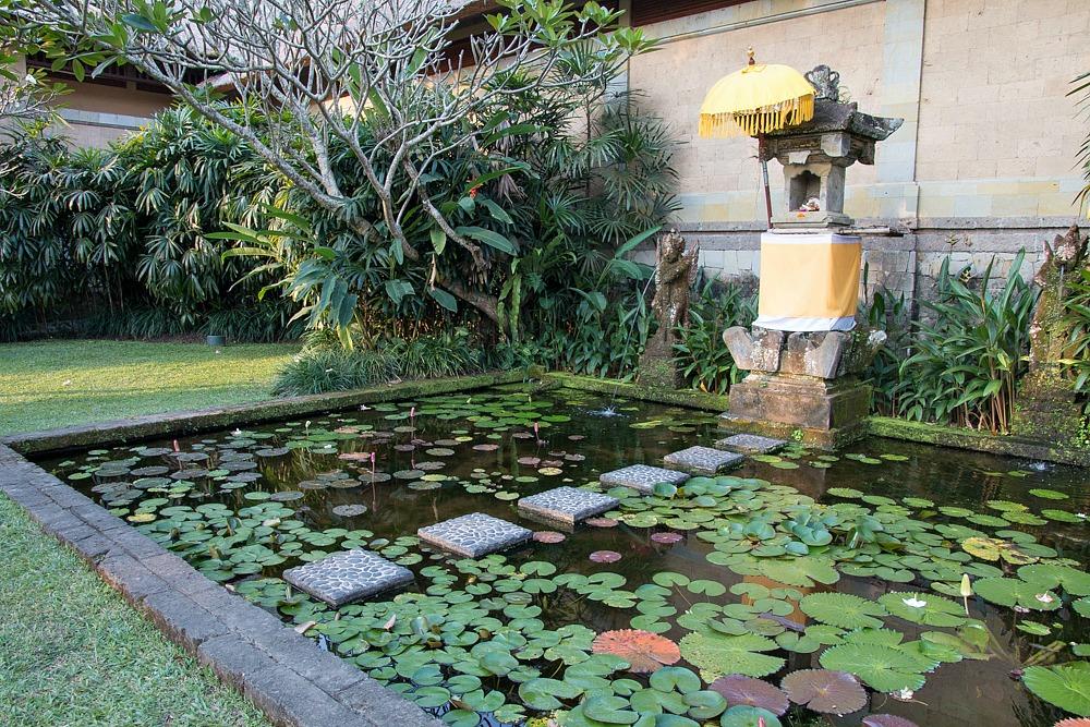 Seerosen Teich Bali Ubud