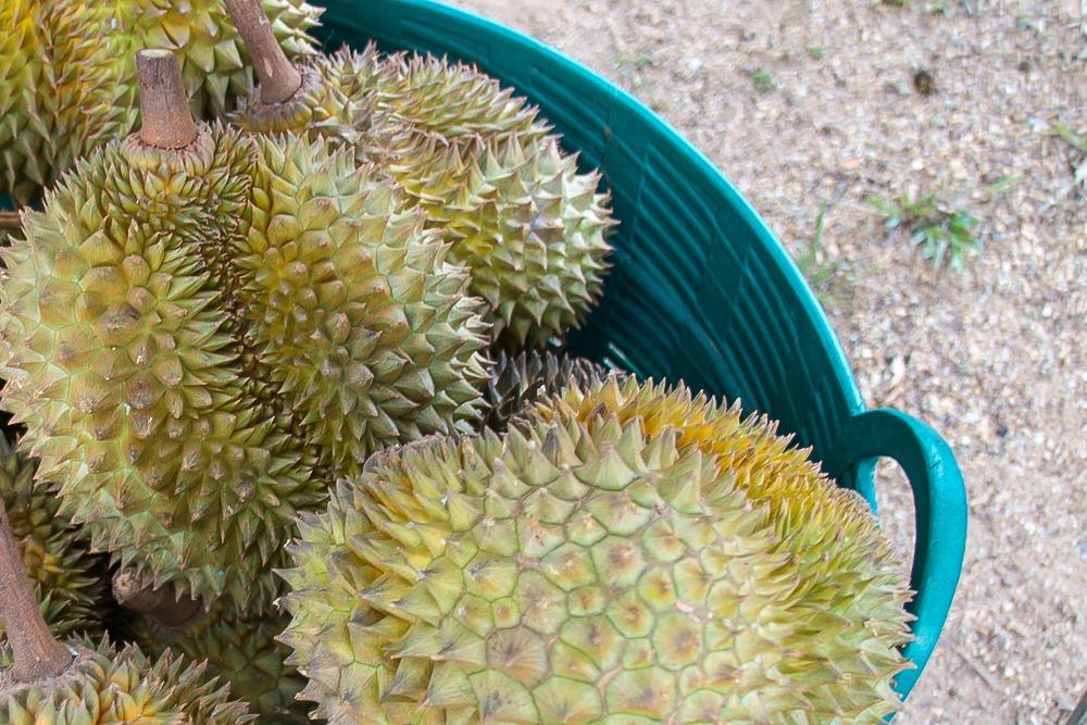 3 Thailand Durian Frucht Obst