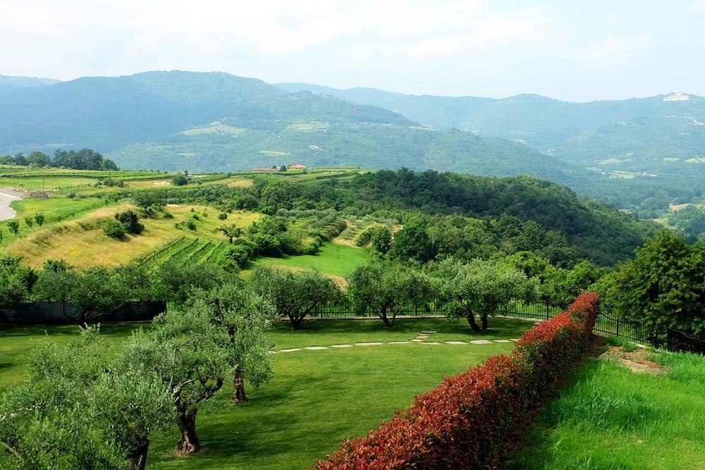 Bild 17 Olivenbäume Natur Landschaft Istrien Kroatien